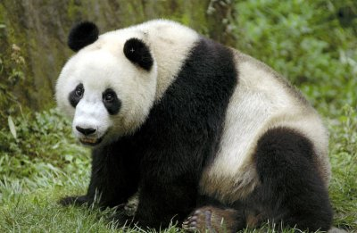 Black and White Panda.jpg